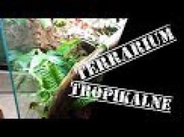 Jak zbudować terrarium - tropiki jak prawdziwe