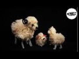 Baranki z pomponów - pomysły na Wielkanoc