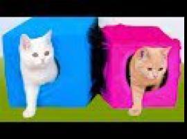 Jak zrobić ciekawe patenty dla kota