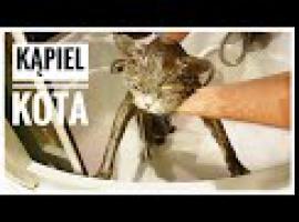 Jak wykąpać kota