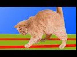 Jak wykonać 8 super pomysłów dla właścicieli kotów