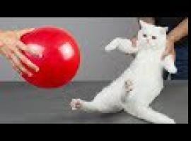 Jak bawić się z kotem - 8 sprawdzonych zabaw