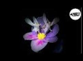Jak zrobić kwiatowe wróżki