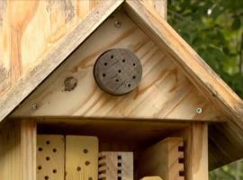 Jak zbudować hotelik dla owadów