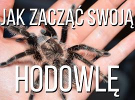 Jak zacząć hodowlę pająka ptasznika