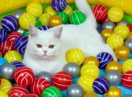 Jak ułatwić sobie życie – 10 trików dla właścicieli kotów