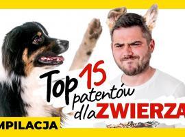 Jak wykonać gadżety dla zwierząt - 15 patentów
