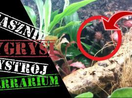 Jak urządzić terrarium dla ptasznika tygrysiego