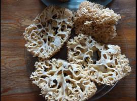 Jak gotować grzyby - siedzuń sosnowy