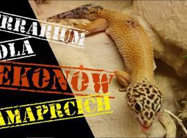 Jak urządzić terrarium dla gekona lamparciego