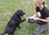 Jak nauczyć psa polecenia czekaj