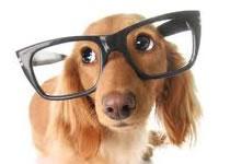 """Jak nauczyć psa komendy """"nie rusz"""""""