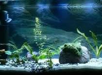 Jak podświetlić akwarium